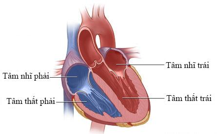 ecg-heart.png